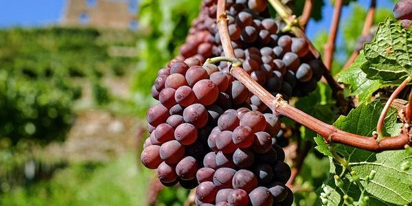 elenco vini rossi italiani
